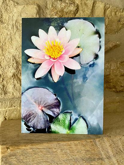 Water Lilies - Burleigh