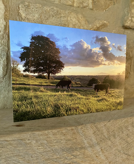 A card showing a landscape containing cows in Amberley