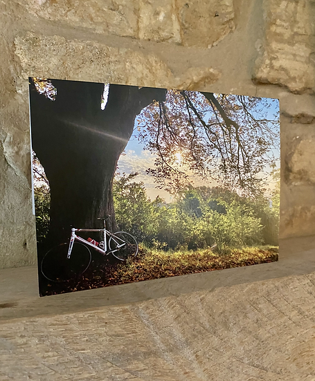 A card showing a bike leaned up against a tree