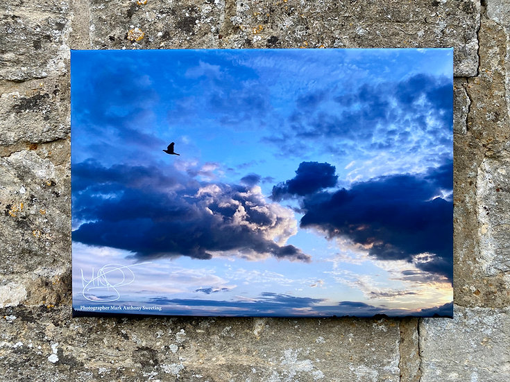 Bird Silhouette - Minchinhampton Canvas