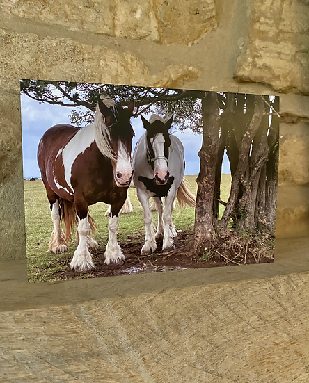 A card showing 2 horses stood by a tree