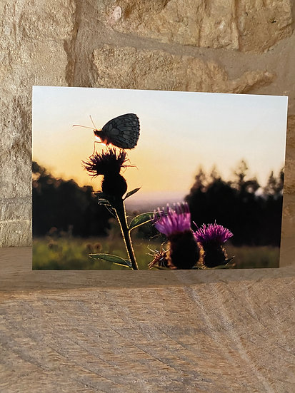 Butterfly silhouetted against the sunset next to a flower