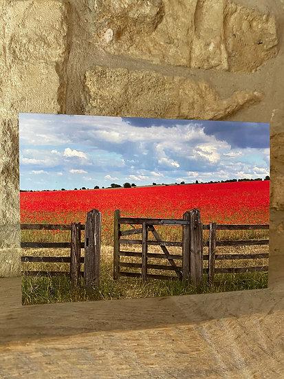 Poppy Field & Gate - Swell