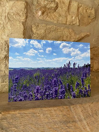 Lavender Fields - Snowshill