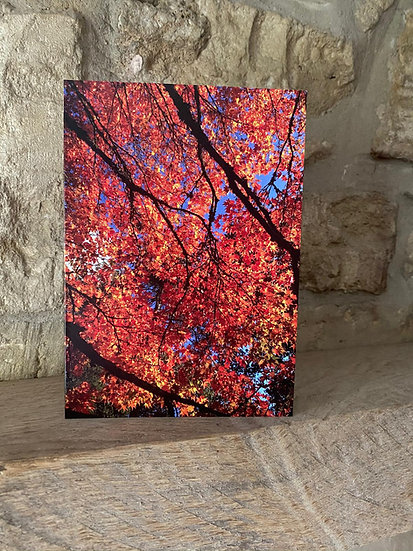 Autumn - Westonbirt Arboretum