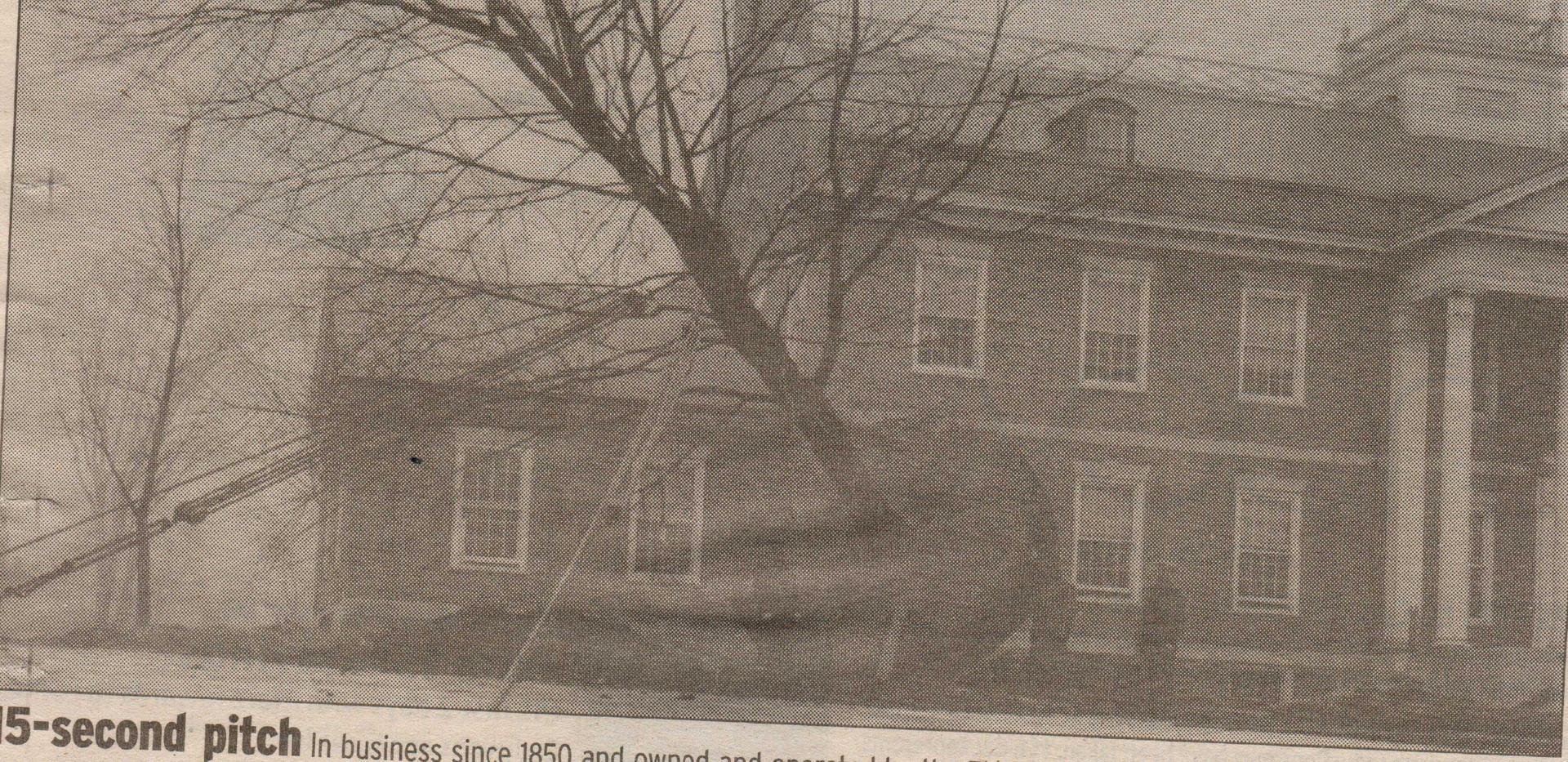 Memorial_Hall_Tree_1940.jpg