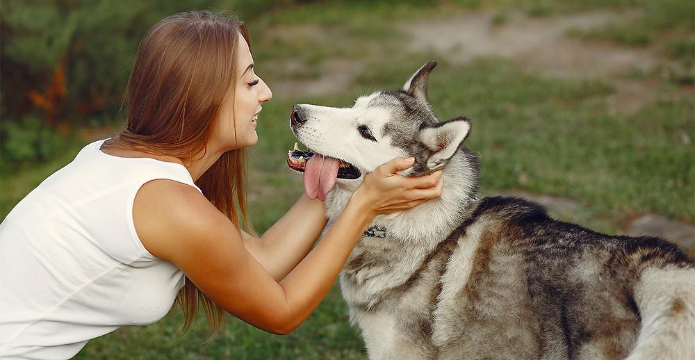 狗狗打喊露大多是要安撫主人的情緒。