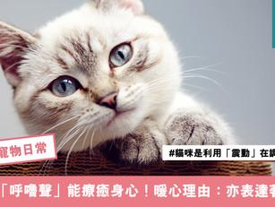 貓咪「呼嚕聲」能降血壓、療癒身心!暖心理由:亦表達著關心