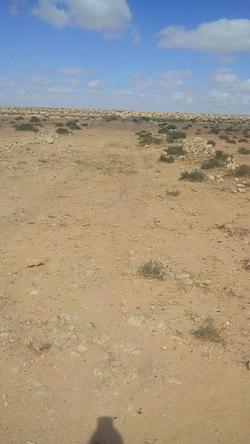 Road approaching Ras el Medauuar - Hill 209