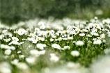 flower-meadow-4999277.jpg