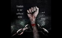 Quote Freedom