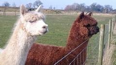 Hall Farm Park - animals