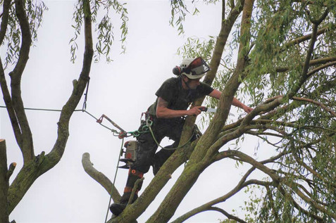 Lincolnshire Tree Services - climbing