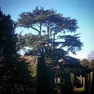 pLincolnshire Tree Services - tree