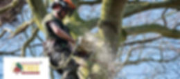 One of the team cutting down some branches. Lincolnshire Tree Services near Tealby