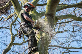Lincolnshire Tree Services - sawing