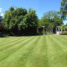 lawn-master-2.jpg