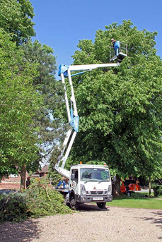 Lincolnshire Tree Services - high