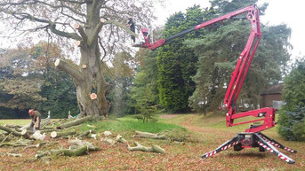Lincolnshire Tree Services - lopping
