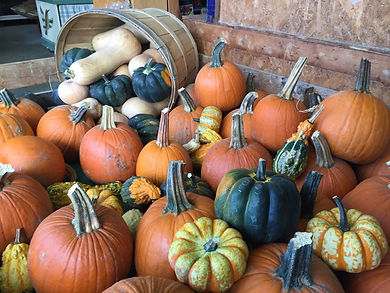 Pumpkins, Guards and Squash