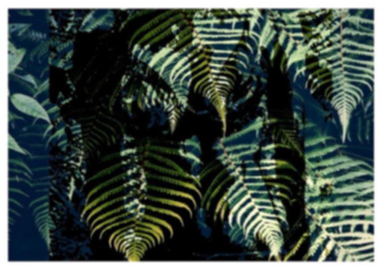 SELVA - PARA IMPRESSAO_edited.jpg