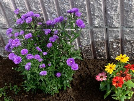 花壇が華やかになりました^^
