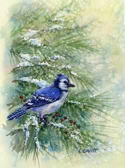 Winter Jay