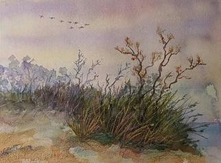 Coastal Fauna