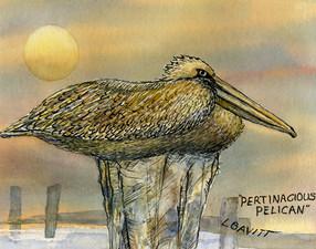 Pertinacious pelican