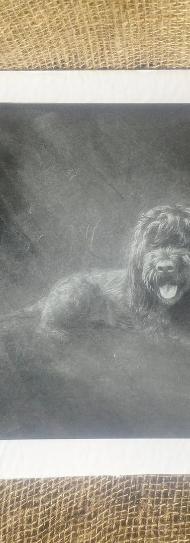 Carter Portrait