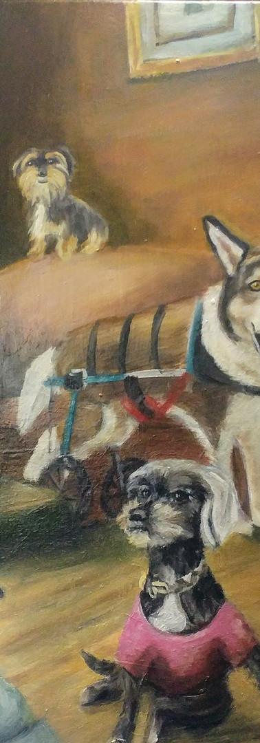 Angela 12 Dog