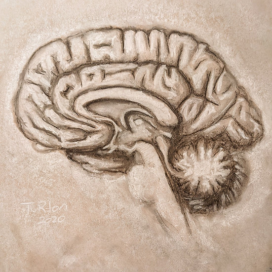 Homework on the Brain (Print)