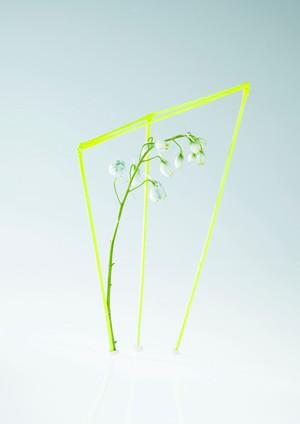 Botanical Fabrications 1.jpg