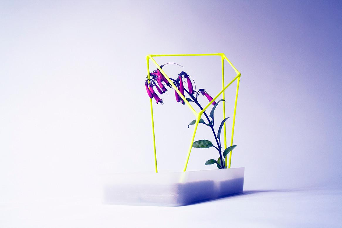 Botanical Fabrications 2.jpg