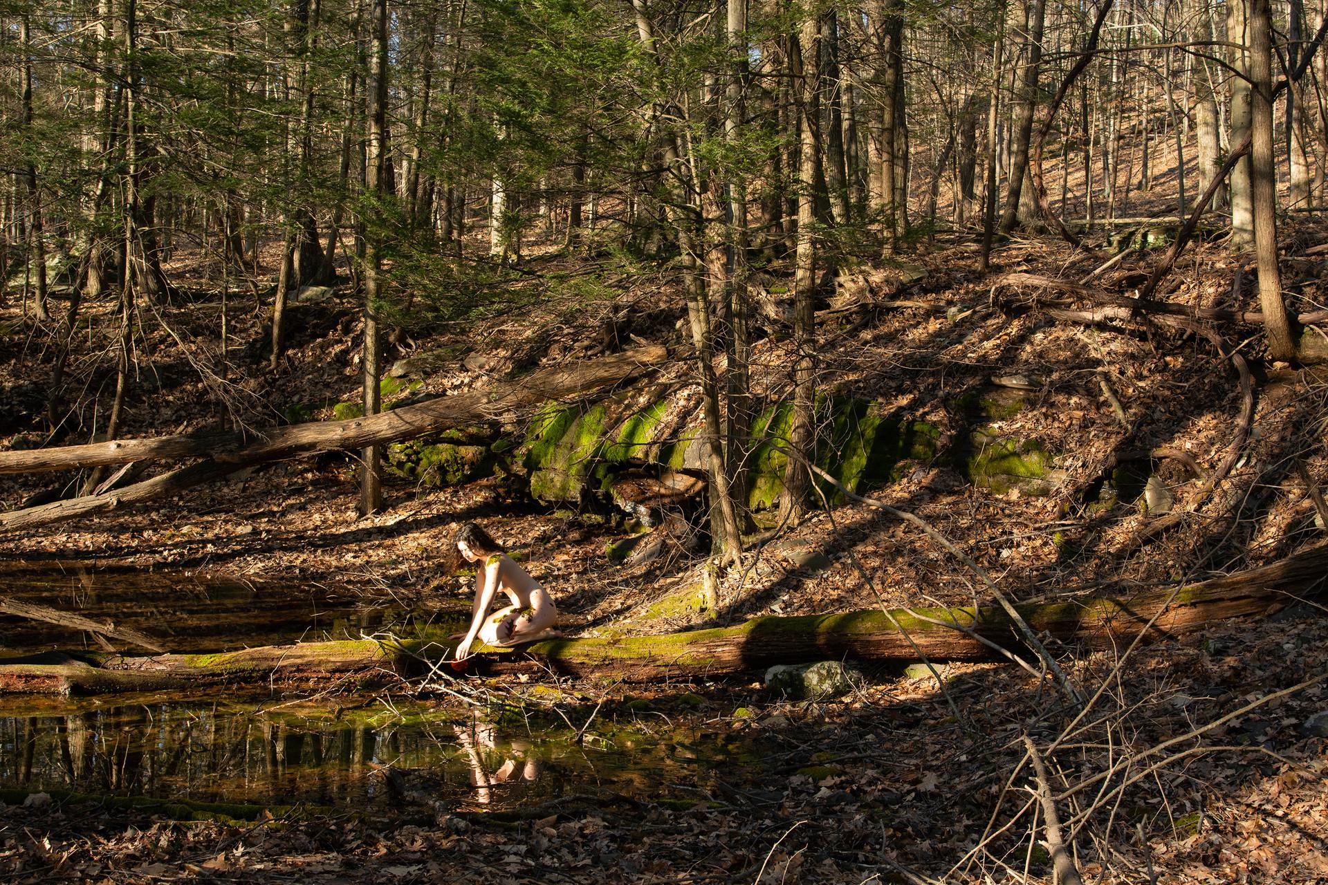 Childhood Woods