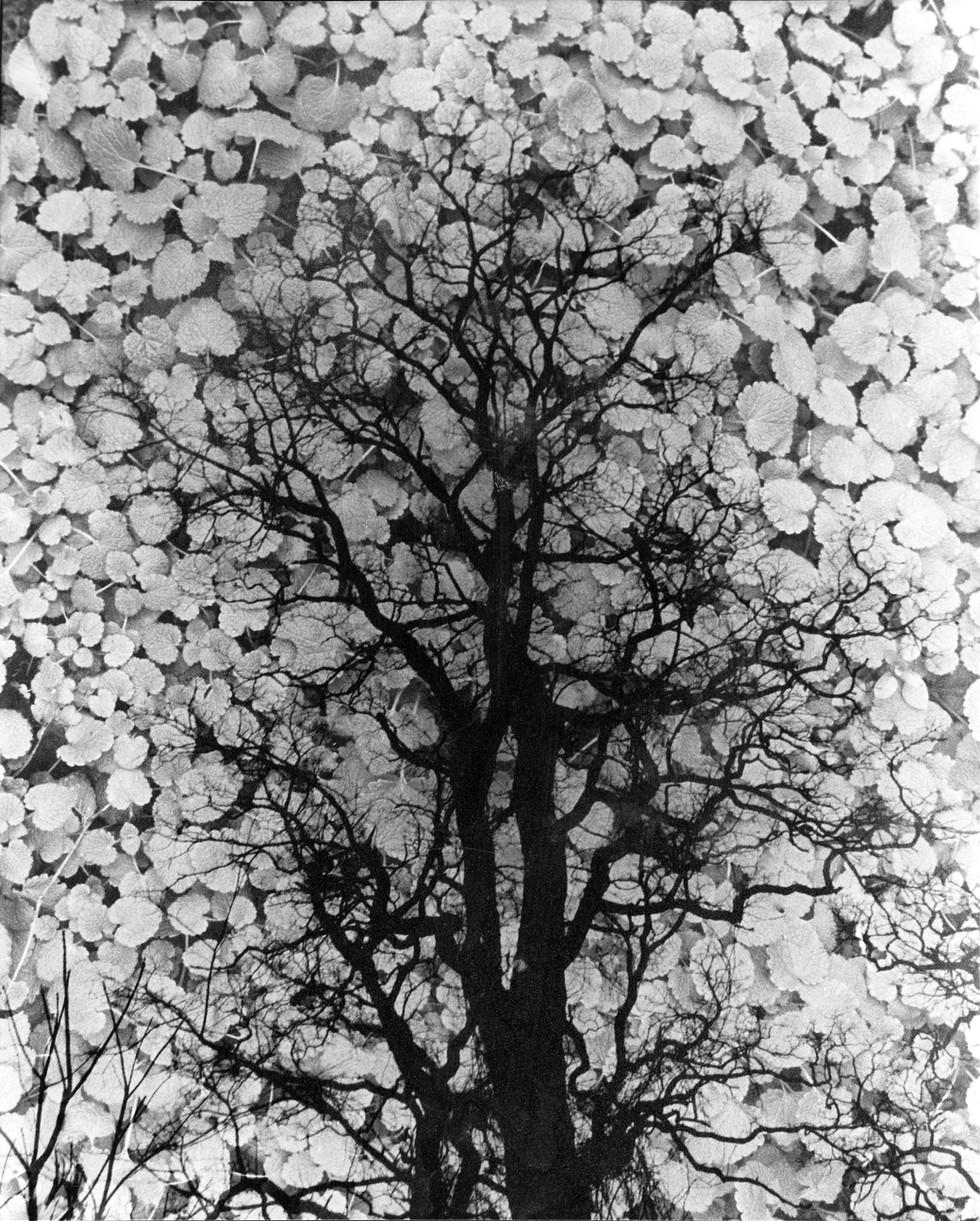 double tree clovers107 copy.jpg