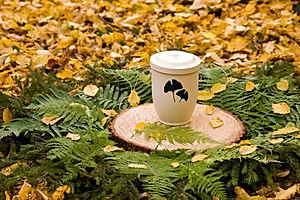 Biologisch abbaubare FriedWald-Urne (2) Im FriedWald wird die Asche Verstorbener in einer biologisch abbaubaren Urne an den Wurzeln eines Baumes beigesetzt. Foto: FriedWald/Thomas Gasparin