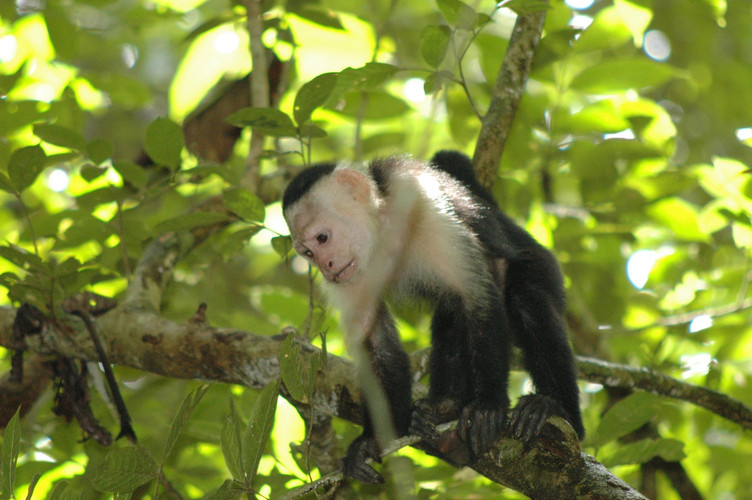 VERONIEK JACOBS COSTA-RICA