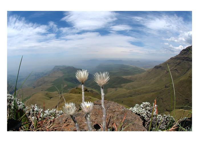 Veroniek Jacobs Zuid-Afrika