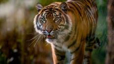 BBC News: Extinction: a million species at risk