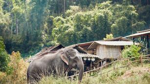 The World Bank Global Wildlife Program