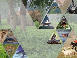 International Conference on Human-Wildlife Conflict and Coexistence