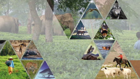International Conference on Human Wildlife Conflict & Coexistence