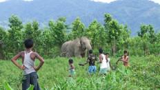 BBC News: India's wildlife conflict