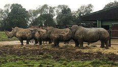BBC News: Covid-19 threatens zoos' conservation work