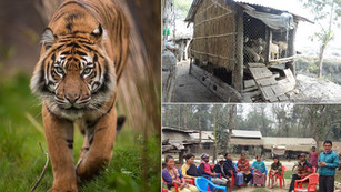 Living with Tigers Project