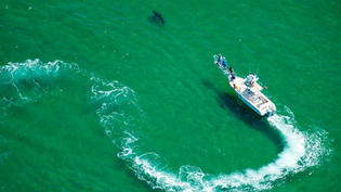 In Cape Cod, New Efforts to Coexist With Sharks