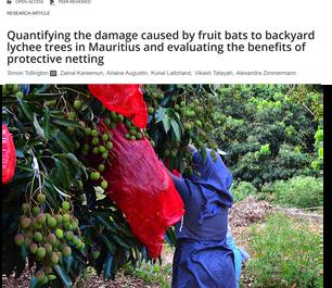 Quantifying damage by fruit bats in Mauritius