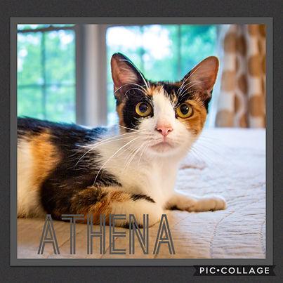 Momma Athena