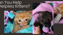 You Can Help These Helpless Kittens